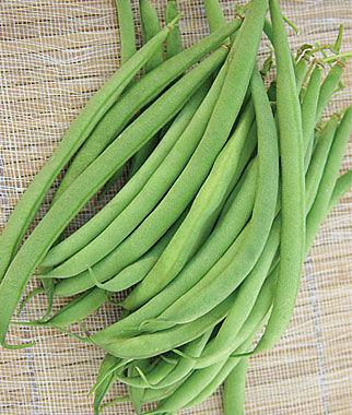 Bean Beananza 1 Pkt. (2 oz.) Bean Seeds, Bush Beans, Beans - Bush, Bush Bean Seeds, Vegetable Seeds, Garden Seeds, Vegetable Seed