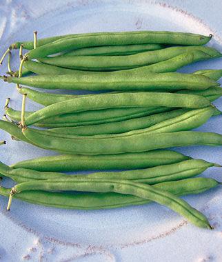 Bean, Blue Lake 274 Bush 1 Pkt. (3 oz.) Bean Seeds, Bush Beans, Beans - Bush, Bush Bean Seeds, Vegetable Seeds, Garden Seeds, Vegetable Seed