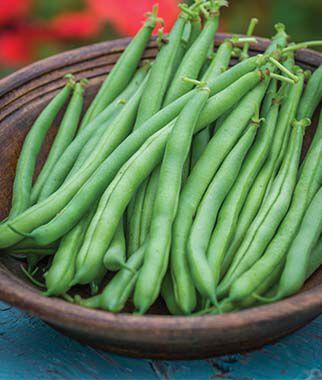 Bean, Blue Lake 47 Bush 1 Pkt. (1/2 lb.)