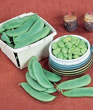 Bean, Lima, Burpee's Best Pole 1 Pkt. (1 oz.) Bean Seeds, Pole Beans, Bean - Pole, Vegetable Seeds, Garden Seeds, Seeds, Garden Supplies