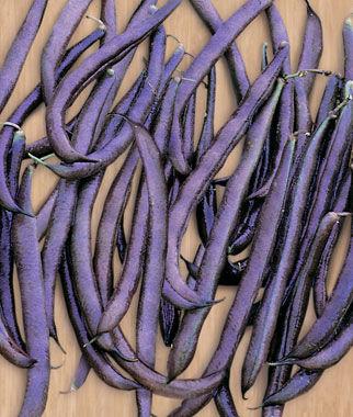 Bean, Purple King 1 Pkt. (2 oz.) Bean Seeds, Pole Beans, Bean - Pole, Vegetable Seeds, Garden Seeds, Seeds, Garden Supplies