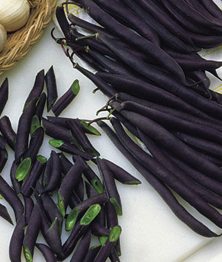Bean, Purple Queen 1 Pkt. (2 oz.) Bean Seeds, Bush Beans, Beans - Bush, Bush Bean Seeds, Vegetable Seeds, Garden Seeds, Vegetable Seed