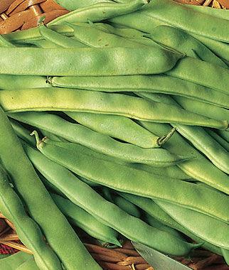 Bean, Roma II Bush 1 Pkt. (2 oz.) Bean Seeds, Bush Beans, Beans - Bush, Bush Bean Seeds, Vegetable Seeds, Garden Seeds, Vegetable Seed