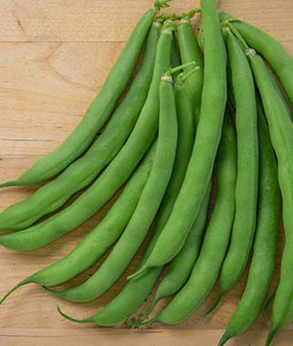 Bean, Tenderpod 1 Pkt. (2 oz.) Bean Seeds, Bush Beans, Beans - Bush, Bush Bean Seeds, Vegetable Seeds, Garden Seeds, Vegetable Seed