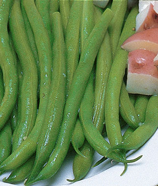 Bean, White Half Runner 1 Pkt. (2 oz.) Bean Seeds, Pole Beans, Bean - Pole, Vegetable Seeds, Garden Seeds, Seeds, Garden Supplies