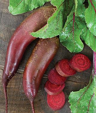 Beet, Cylindra 1 Pkt. (1000 seeds), Beet Seeds, Beets, Beet Seed, Seeds, Garden Seeds, Vegetable Seeds, Garden Supplies