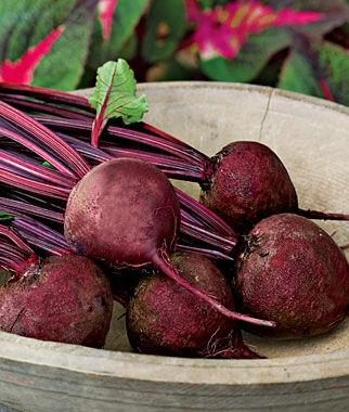 Beet, Detroit Dark Red Med Top 1 Pkt. (1000 seeds), Beet Seeds, Beets, Beet Seed, Seeds, Garden Seeds, Vegetable Seeds, Garden Supplies