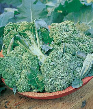 Broccoli, Di Ciccio Organic 1 Pkt. (200 seeds)