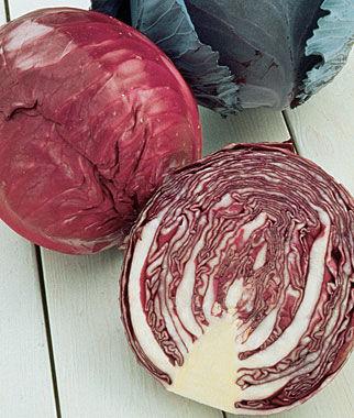 Cabbage, Salad Delight (Red) 1 Pkt. (400 seeds) Cabbage Seeds, Cabbage Seeds, Cabbages Seed, Cabage Seeds, Cabbage, Garden Seeds, Vegetable Seeds