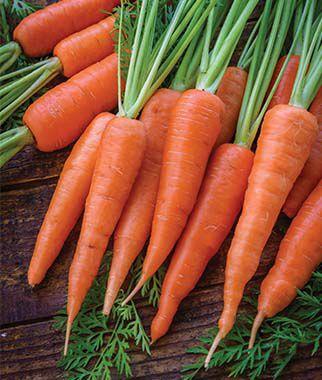 Carrot, Danvers Half Long 1 Pkt. (2000 seeds)