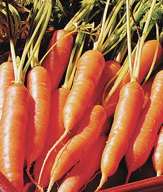 Carrot, Little Finger 1 Pkt. (1500 seeds)