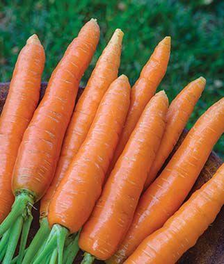 Carrot, Nantes Half Long 15' Seed Tape
