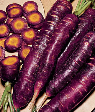 Carrot, Purple Dragon 1 Pkt. (1000 seeds)