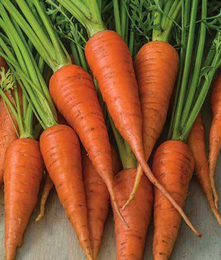Carrot, Short 'N Sweet 1 Pkt. (1500 seeds)