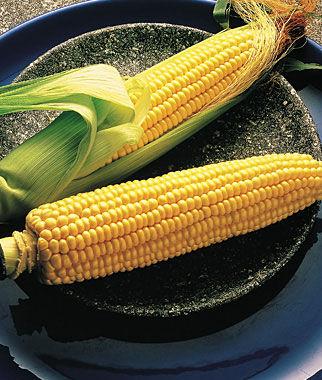 Corn, Illini Xtra Sweet Hybrid 1 Pkt. (200 seeds) Corn Seeds, Corn Seed, Seed Corn, Corn, Sweet Corn Seeds, Super Sweet Corn Seeds, Garden Seeds