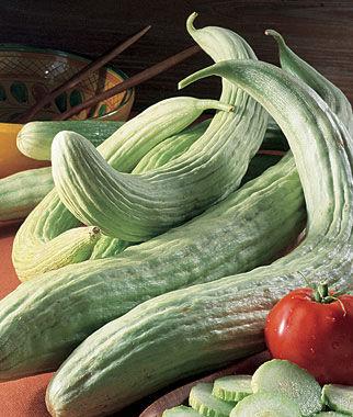 Cucumber, Armenian 1 Pkt. (100 seeds)