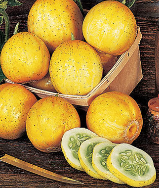Cucumber, Lemon 1 Pkt. (50 seeds)