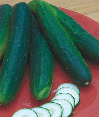 Cucumber, Sweet Burpless Hybrid 1 Pkt. (30 seeds)