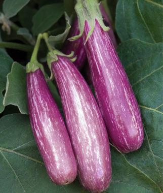 Eggplant, Fairy Tale Hybrid 1 Pkt. (30 seeds) Eggplant Seeds, Eggplant Seed, Eggplant Plants, Eggplant Starts, Eggplant, Garden Seeds, Garden