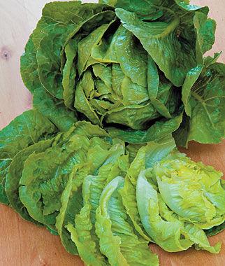 Lettuce, EZ Serve 22.5' Seed Tape Lettuce Seed, Lettuce Seeds, Salad Greens, Lettuce, Lettuce Mix, Mesclun, Garden Seeds, Salad Seeds