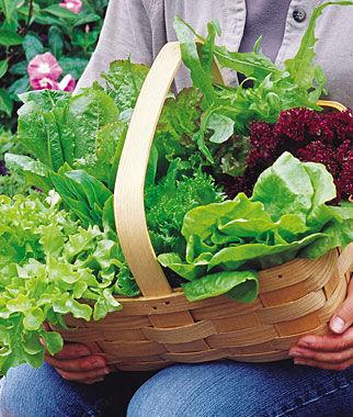 Lettuce, Heatwave Blend 1 Pkt. (500 seeds) Lettuce Seed, Lettuce Seeds, Salad Greens, Lettuce, Lettuce Mix, Mesclun, Garden Seeds, Salad Seeds