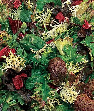 Mesclun, Classic Mix 1 Pkt. (1500 seeds) Lettuce Seed, Lettuce Seeds, Salad Greens, Lettuce, Lettuce Mix, Mesclun, Garden Seeds, Salad Seeds