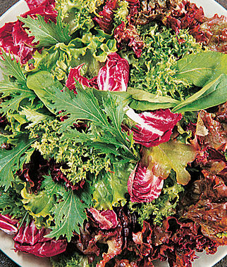 Mesclun, Green Party Mix 1 Pkt. (1500 seeds) Lettuce Seed, Lettuce Seeds, Salad Greens, Lettuce, Lettuce Mix, Mesclun, Garden Seeds, Salad Seeds