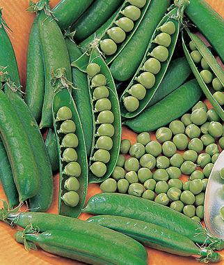 Pea, Spring 1 Pkt. (200 seeds) Pea Seeds, Peas Seed, Pea Seeds, Peas, Garden Peas, Garden Seeds, Vegetable Seeds, Garden Supplies