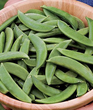 Pea, Sugar Bon 1 Pkt. (200 seeds) Pea Seeds, Peas Seed, Pea Seeds, Peas, Garden Peas, Garden Seeds, Vegetable Seeds, Garden Supplies