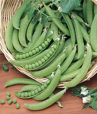 Pea, Super Snappy 1 Pkt. (300 seeds) Pea Seeds, Peas Seed, Pea Seeds, Peas, Garden Peas, Garden Seeds, Vegetable Seeds, Garden Supplies
