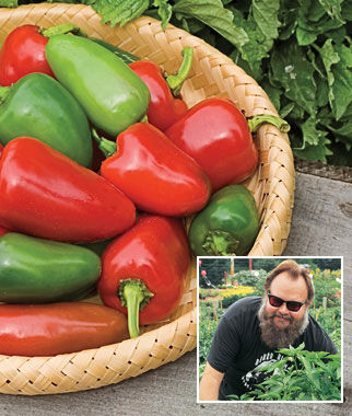 Pepper, Hot, Biker Billy Hybrid 3 Plants Hot Pepper Seeds, Chili Pepper Seeds, Chili Seeds, Pepper Seeds, Peppers, Chilis, Garden Seeds, Seed