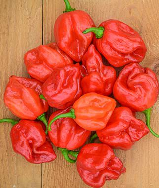 Pepper, Hot, Habanero Red Organic 1 Pkt. (75 seeds) Hot Pepper Seeds, Chili Pepper Seeds, Chili Seeds, Pepper Seeds, Peppers, Chilis, Garden Seeds, Seed