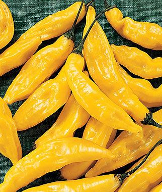 Pepper, Hot, Lemon 1 Pkt. (30 seeds) Hot Pepper Seeds, Chili Pepper Seeds, Chili Seeds, Pepper Seeds, Peppers, Chilis, Garden Seeds, Seed