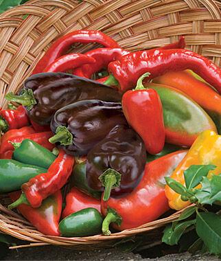 Pepper, Hot Salsa Mixture 1 Pkt. (100 seeds) Hot Pepper Seeds, Chili Pepper Seeds, Chili Seeds, Pepper Seeds, Peppers, Chilis, Garden Seeds, Seed