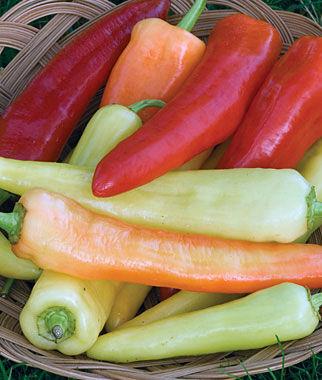 Pepper, Sweet, Banana 1 Pkt. (125 seeds) Pepper Seeds, Sweet Pepper Seeds, Stuffing Peppers, Bell Peppers, Sweet Peppers, Bell Pepper Seeds