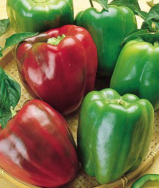Pepper, Sweet California Wonder 1 Pkt. (100 seeds) Pepper Seeds, Sweet Pepper Seeds, Stuffing Peppers, Bell Peppers, Sweet Peppers, Bell Pepper Seeds