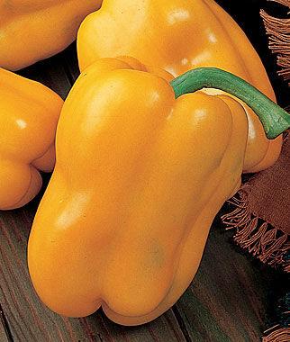 Pepper, Sweet Golden Giant II Hybrid 1 Pkt. (30 seeds) Pepper Seeds, Sweet Pepper Seeds, Stuffing Peppers, Bell Peppers, Sweet Peppers, Bell Pepper Seeds