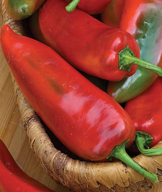 Pepper, Sweet The Godfather Hybrid 1 Pkt. (30 seeds) Pepper Seeds, Sweet Pepper Seeds, Stuffing Peppers, Bell Peppers, Sweet Peppers, Bell Pepper Seeds