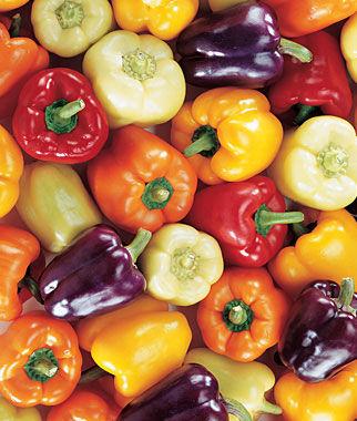 Pepper, Sweet Carnival Mix Organic 1 Pkt. (25 seeds) Pepper Seeds, Sweet Pepper Seeds, Stuffing Peppers, Bell Peppers, Sweet Peppers, Bell Pepper Seeds
