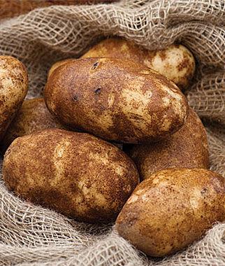 Potato, Russet Norkotah 1 Pack (10 mini tubers) Potato, Potatoes, Seed Potatoes, Potato Sets, Potato Seed, Garden Potatoes, Vegetable Seeds