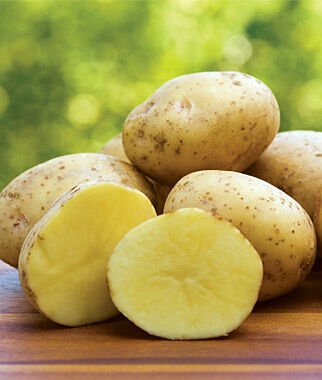 Potato, Yukon Gold 1 pack (10 mini tubers) Potato, Potatoes, Seed Potatoes, Potato Sets, Potato Seed, Garden Potatoes, Vegetable Seeds