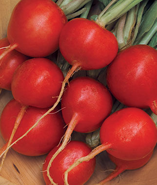 Radish, Cherry Belle Organic 1 Pkt. (400 seeds) Radish, Radish Seeds, Seeds, Vegetable Seeds, Garden Seeds, Vegetable, Garden