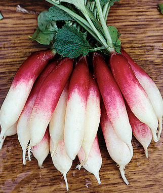 Radish, Fire 'N Ice 1 Pkt. (300 seeds) Radish, Radish Seeds, Seeds, Vegetable Seeds, Garden Seeds, Vegetable, Garden