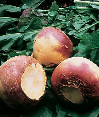 Rutabaga, Burpee's Purple Top 1 Pkt. (600 seeds) Rutabaga Seeds, Rutabaga Seed, Rutabaga, Rutabega, Garden Seeds, Vegetable Seeds