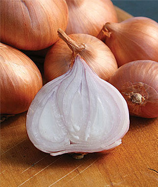 Shallots, Holland Red 1 bag (10 sets) Shallots, Shallot, Shallot Sets, Shallot Seeds, Garden Seeds, Vegetable Seeds, Garden Supplies