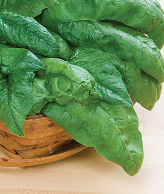Spinach, Bloomsdale Long Standing 1 Pkt. (675 seeds) Spinach Seed, Spinach Seeds, Spinach, Seeds, Garden Seeds, Vegetable Seeds, Garden Supplies