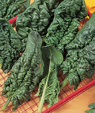 Spinach, Harmony Hybrid 1 Pkt. (250 seeds) Spinach Seed, Spinach Seeds, Spinach, Seeds, Garden Seeds, Vegetable Seeds, Garden Supplies