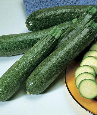 Squash, Summer, Burpee Hybrid Zucchini 1 Pkt. (25 seeds) Zucchini Seeds, Zucchini Seed, Summer Squash, Squash, Zucchini Squash, Garden Seeds, Vegetable Seeds