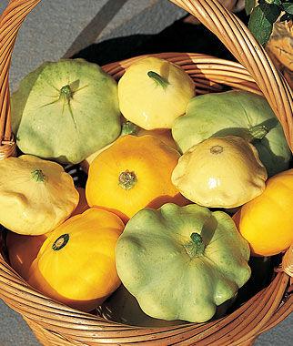 Squash, Summer, Summer Scallop Hybrid Mix 1 Pkt. (25 seeds) Summer Squash Seeds, Summer Squash Seed, Squash Seeds, Summer Squash, Garden Seeds, Vegetable Seeds
