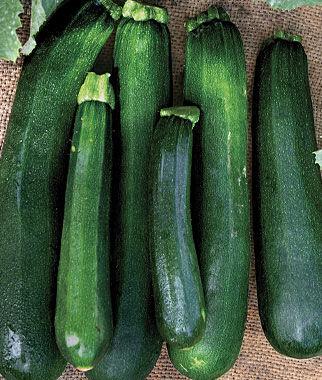 Squash, Zucchini Black Beauty Organic 1 Pkt. (15 seeds) Zucchini Seeds, Zucchini Seed, Summer Squash, Squash, Zucchini Squash, Garden Seeds, Vegetable Seeds